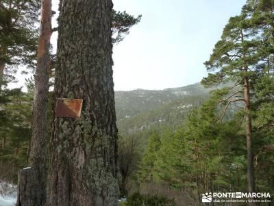 Siete Picos - Valle la Fuenfría; rutas de montaña; grupos senderismo madrid